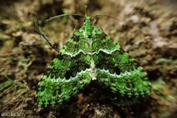The Green Monster